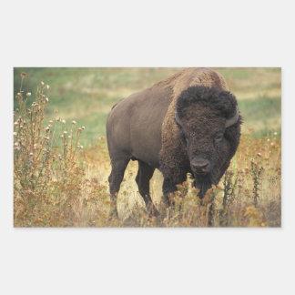 Pegatinas del bisonte americano pegatina rectangular