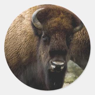 Pegatinas del búfalo 1549 pegatina redonda