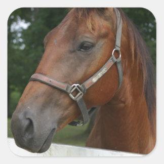 Pegatinas del caballo de la castaña dulce calcomanías cuadradas