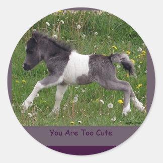 Pegatinas del caballo del Pinto del bebé mini Etiqueta Redonda