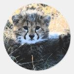 Pegatinas del cachorro del guepardo etiquetas redondas