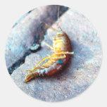 Pegatinas del camarón del bebé etiqueta redonda