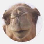 Pegatinas del camello pegatina redonda