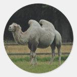 Pegatinas del camello pegatinas redondas