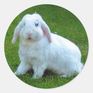 pegatinas del conejo etiquetas redondas
