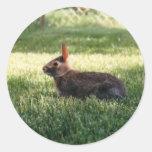 Pegatinas del conejo de conejito