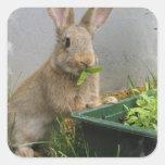 Pegatinas del conejo de conejo de rabo blanco