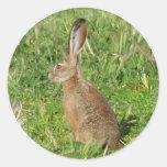 Pegatinas del conejo de Jack Pegatinas Redondas