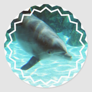 Pegatinas del delfín común etiqueta redonda
