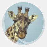 Pegatinas del diseño de la jirafa pegatinas redondas