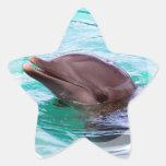 Pegatinas del diseño del delfín colcomania cuadrada