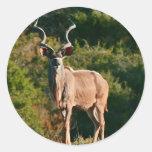 Pegatinas del este de Kudu del cabo Pegatina Redonda
