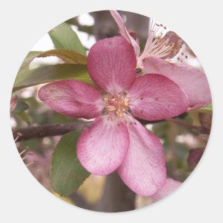 Pegatinas del flor de la fruta etiqueta redonda