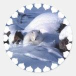 Pegatinas del Fox ártico Pegatina Redonda