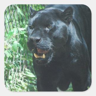 Pegatinas del gato de pantera negra calcomania cuadrada personalizada