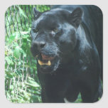 Pegatinas del gato de pantera negra pegatina cuadrada