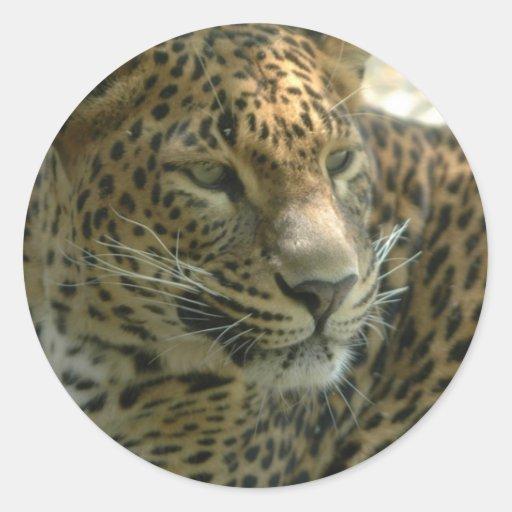 Pegatinas del gato de pantera pegatina redonda