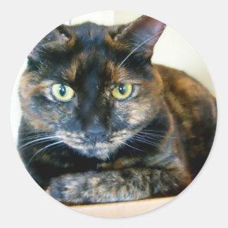 pegatinas del gato del tortie pegatina redonda