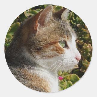 Pegatinas del gato pegatina redonda