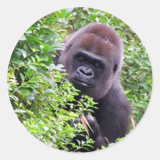 Pegatinas del gorila etiqueta redonda
