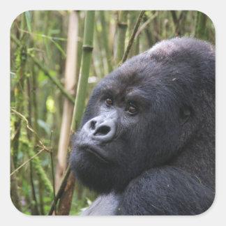 Pegatinas del gorila de la tierra baja pegatina cuadrada