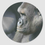 Pegatinas del gorila de montaña