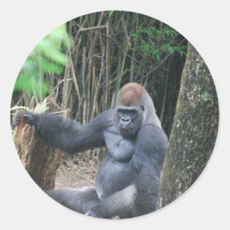 Pegatinas del gorila del Silverback que se sientan Etiquetas Redondas