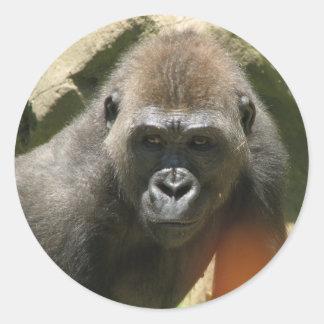 Pegatinas del gorila pegatina redonda