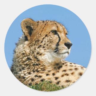 Pegatinas del guepardo etiqueta redonda