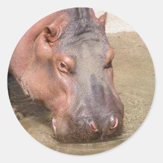 Pegatinas del hipopótamo que sorben pegatinas redondas