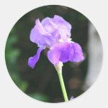 Pegatinas del iris barbudo de la lavanda pegatina redonda
