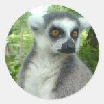 Pegatinas del Lemur de Madagascar Pegatina Redonda