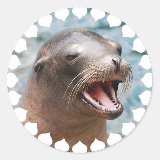 Pegatinas del león marino de California Pegatinas Redondas