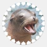 Pegatinas del león marino de California Pegatina Redonda