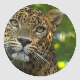 Pegatinas del leopardo etiqueta redonda
