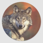 Pegatinas del lobo gris pegatina redonda