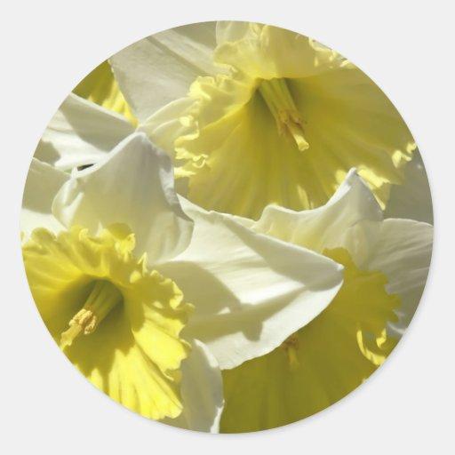 Pegatinas del narciso de la primavera pegatina redonda