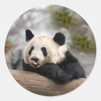 Pegatinas del oso de panda gigante pegatinas redondas