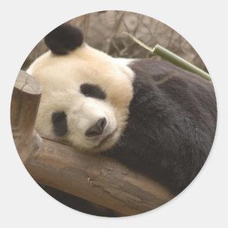 Pegatinas del oso de panda gigante pegatina redonda