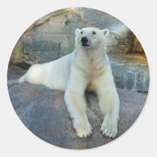Pegatinas del oso polar etiqueta redonda
