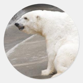 Pegatinas del oso polar 1
