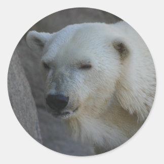 Pegatinas del oso polar pegatina redonda