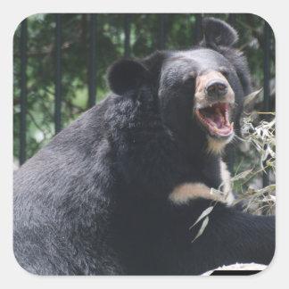 Pegatinas del oso que gruñen pegatina cuadrada