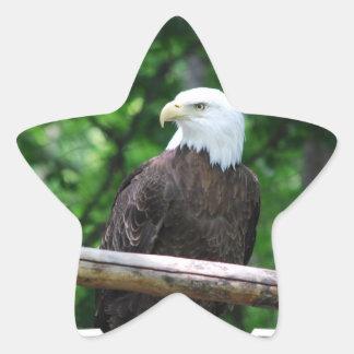 Pegatinas del pájaro de Eagle calvo Pegatina En Forma De Estrella