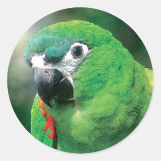 Pegatinas del pájaro del loro pegatina redonda