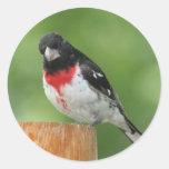 Pegatinas del pájaro del Rosa-breasted Pegatina Redonda