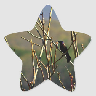 Pegatinas del pájaro pegatina en forma de estrella