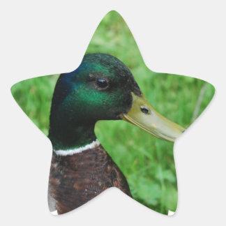 Pegatinas del pato silvestre pegatinas forma de estrellaes personalizadas