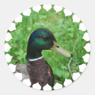 Pegatinas del pato silvestre etiquetas redondas