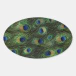Pegatinas del pavo real del azul real del verde es